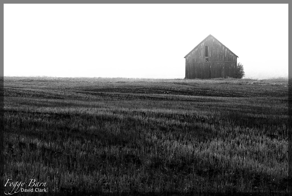 A foggy, abandoned barn at the far edge of a freshly cut field of grass.