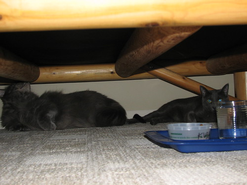 The kitties are hiding