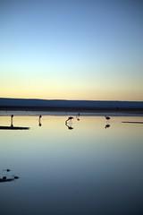 Salar de Atacama (Ndecam) Tags: de san pedro atacama salar