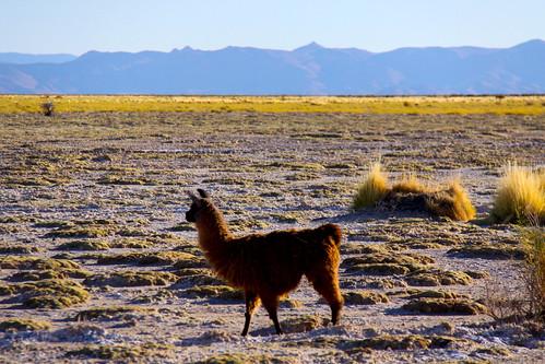 Altiplano argentino (Tumbaya, Jujuy, Argentina).