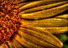 the empty house... (figment_) Tags: flower texture nature artistic explore textures chapeau sunflower layers legacy hdr textured merged tistheseason firstquality photomatix supershot photographydigitalart infinestyle memoriesbook theunforgettablepictures fleursetnature clickcamera multimegashot awardtree alwaysexc goldenart artistictreasurechest imagesforthelittleprince miasbest musicsbest daarklands oracope flickrvault magicunicornverybest selectbestfavorites selectbestexcellence sailsevenseas flickrvaultexcellence trolledproud daarklandsexcellence
