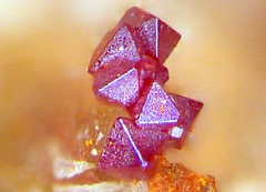cuprite crystals (MuseumWales) Tags: colour nature museum wales store natural crystal exhibition national collections online mineral vault gem specimen lustre gemstone mineralogy dislpay
