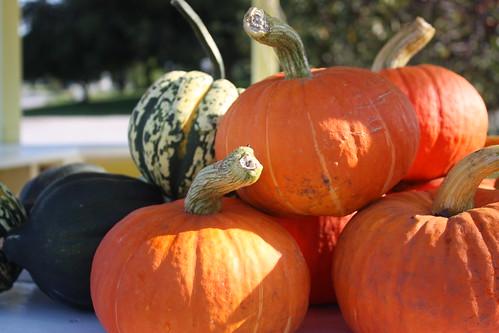 Michigan Pumpkins