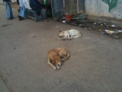 Dogs sleeping on the street in India (taken during Adams recent business trip)