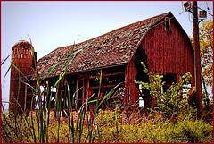This Barn's History (Doug Wallick) Tags: grass minnesota barn yard site maple grove waste compost picnik dilapidated