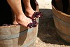 (frankspastic) Tags: feet grapes grape stomping