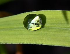Grass Droplets 2