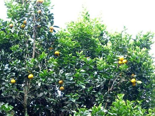Citrus-Galapagos Tags