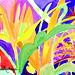 Néctar - Viva a Vida II - aquarela Sonia Madruga