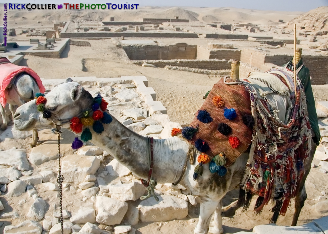 A camel waits to give a tourist a ride at the funerary complex of Djoser at Saqqara, near Cairo, Egypt.