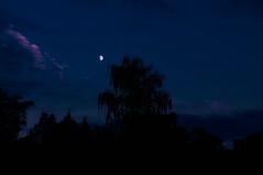 I See a Bad Moon Rising..... (Chris H#) Tags: trees moon halloween clouds photoshop rising northampton silhouettes nighttime lightroom s3000 blueblack abingtonpark creedenceclearwaterrevival iseeabadmoonrising nikond5000