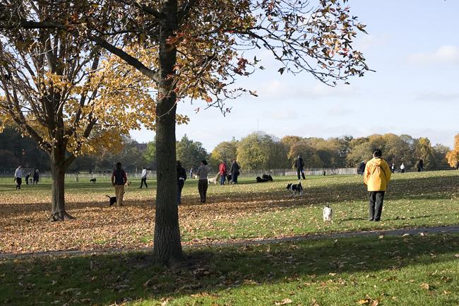 Prospect Park, Fall