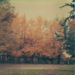 (jeffreywithtwof's) Tags: autumn fall film jeff yellow female brooklyn square polaroid sx70 artistic foliage ginkgobiloba hutton stinky tz ginko fortgreenepark stinks sx70alpha1 roidweek jeffhutton jeffhuttonphotography jeffreyhutton