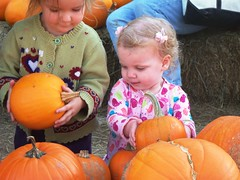 Comparing pumpkins (Ludeman99) Tags: eowynlouisebitner pumpkinpicking2009