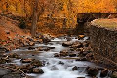 """Swinging Bridge"" at American Fork Canyon (Lee Ann L.) Tags: bridge autumn trees motion fall water leaves river gold golden utah rocks cascade swingingbridge americanforkcanyon americanforkriver"