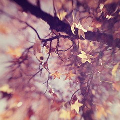 Fall ~ Lensbaby style (liz.rusby) Tags: orange color tree fall leaves yellow bokeh change lensbabycomposer