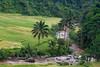 Tropical river (Peter Nijenhuis) Tags: river indonesia java palmtrees ricepaddies 500d ef70300mmf456isusm wanasigra peternijenhuis