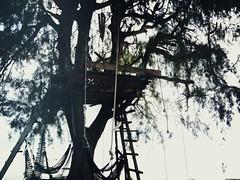 Treehouse, Pulau Besar