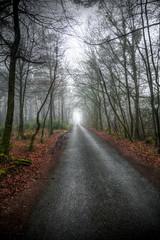 Dark Lane 45/365 (rmrayner) Tags: hdr lane avenue woods fog spooky trees 365daysof2017 365project 365the2017edition 45365 road vanishingpoint