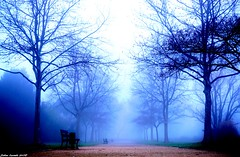 Dans L'Allée Du Parc... (sabinelacombe) Tags: parc arbres berreletang brume paca provence bouchesdurhone