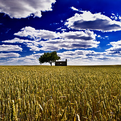 A House is not a Home (Drummer Photo Experience) Tags: madrid blue light cloud naturaleza house color tree luz home beautiful beauty yellow azul clouds dark arbol casa nikon wheat country pueblo paisaje amarillo nubes campo nublado nube belleza trigo hogar paisajeurbano oscura d60 sevillalanueva platinumheartaward flickrestrellas quarzoespecial artofimages platinumbestshot bestcapturesaoi drummerphotoexperience