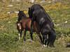 Chámalle burro ó cabalo!! por Isidr☼ Cea