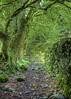 England: Cumbria - Stony Lane (Tim Blessed) Tags: uk trees nature landscapes countryside moss scenery gates lanes singlerawtonemapped