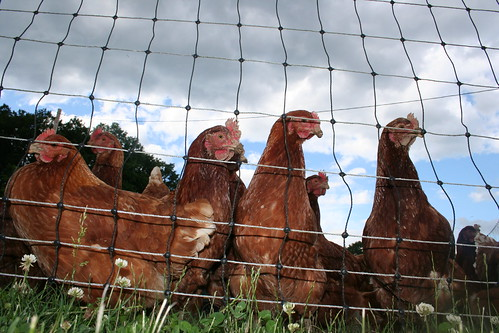 hen party by SpecialKRB on Flickr