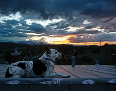 Ringo on the Roof (ex_magician) Tags: pictures roof sunset dog sphinx oregon landscape lumix photo