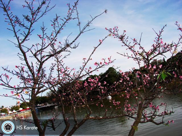 XXIII Festa da Cerejeira de Garça