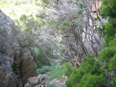 Sur le chemin de ronde du Castellu