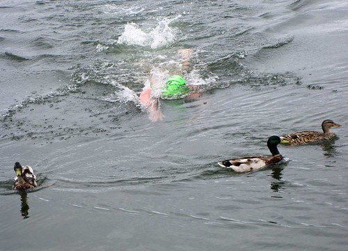 Swimming with Ducks