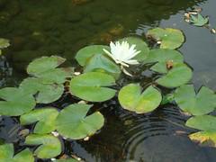 Chinese garden, PDX
