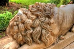 my first HDR (ellamiranda) Tags: sculpture lion escultura leon viadelmar quintavergara