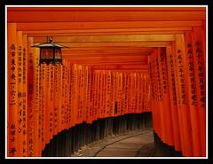 Fushimi Inari Torii - 伏見稲荷大社の鳥居
