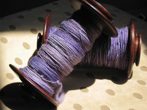 SCF Irises  Shetland Top Singles