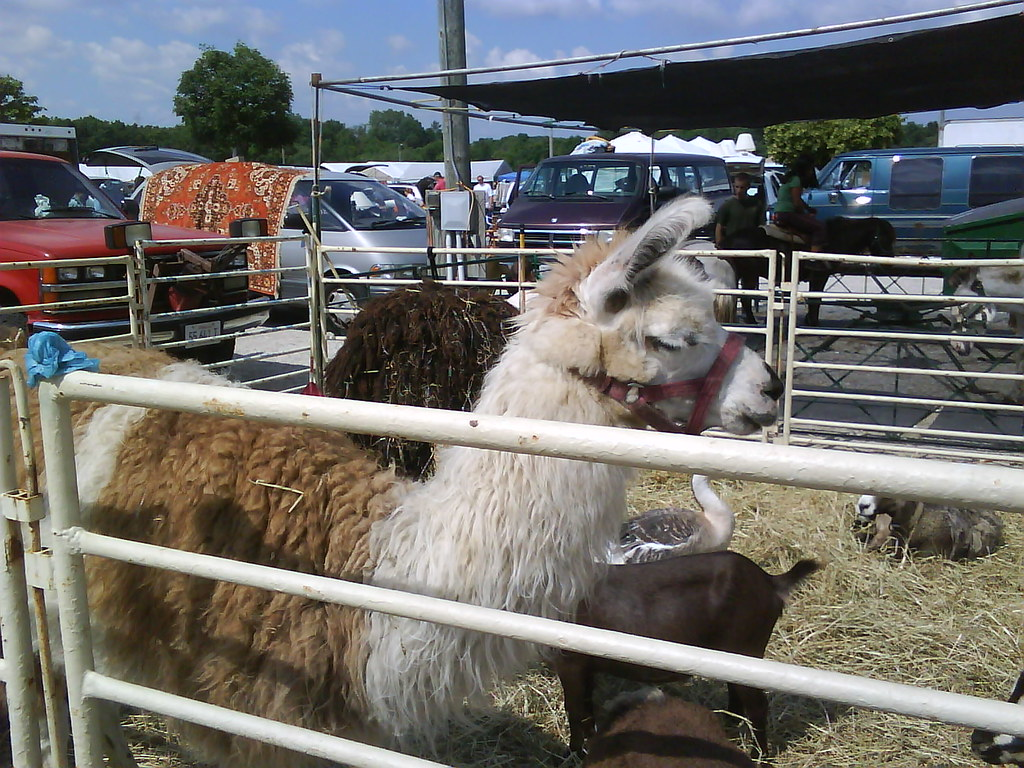 llama at the 7 mile fair?