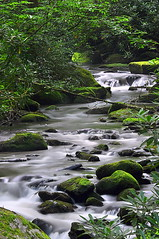 Joyce Kilmer Memorial Forest (Pheno Me Non) Tags: nikon d90 forest stream river water silky moss brook rocks trees joycekilmermemorialforest northcarolina appalachianblueridgeforests cherohalaskyway blueridgemountains appalachianmountains virginforest old growth memorial longexposure