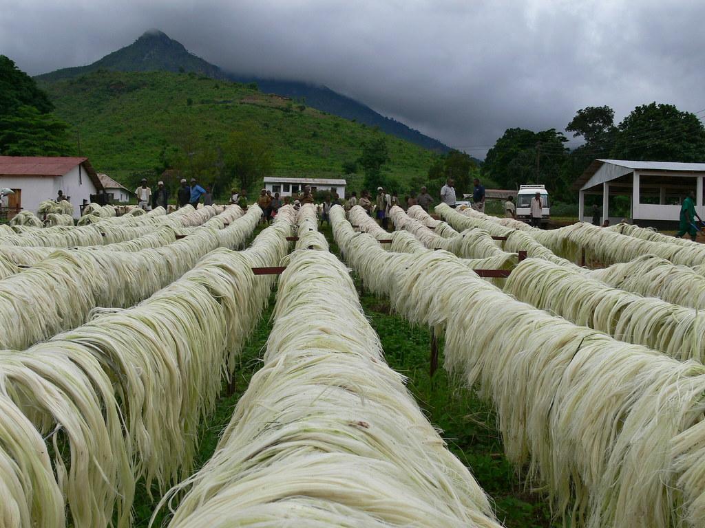 Sisal Drying- Tanga, Tanzania, 2006