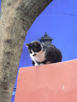 chat de la casa azul.jpg