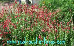 Austin Things to Do - Lady Bird Wildflower Center - Austin Texas