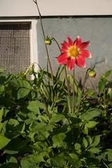 (*megs*) Tags: garden abundance homelife