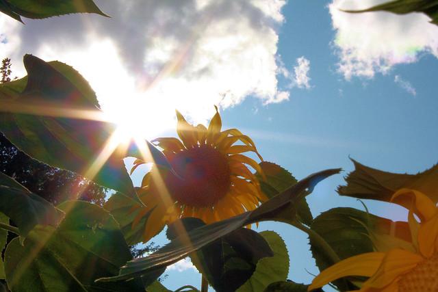 Burst Of Sun