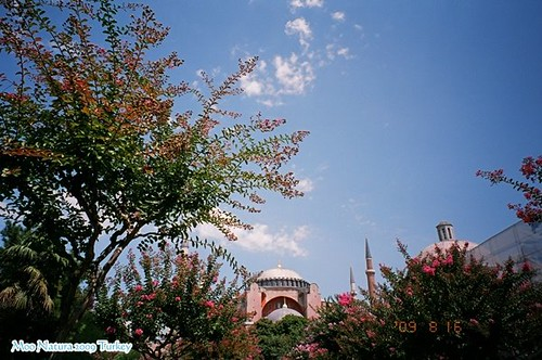 Natura 那秋。Turkey Istanbul-2