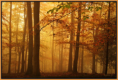 Mist Of Autumn. (Picture post.) Tags: autumn trees mist green nature beautiful landscape woods firstplace 1001nights paysage arbre brume matin otw autumnmorning autumngold golddragon abigfave platinumphoto colorphotoaward theunforgettablepictures goldstaraward spiritofphotography saariysqualitypictures bestofmywinners flickrunitedaward