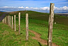 Point Reyes Roadside (john weiss) Tags: california geotagged unitedstates pointreyes inverness pictureperfect sirfrancisdrake 18200vr d80 anawesomeshot aplusphoto pointreyeshistorical reyes166 geo:lat=3801280000 geo:lon=12299340248