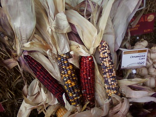 Pretty Fall Colorful Corn!