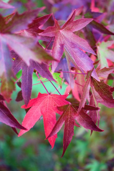 Autumn 5404