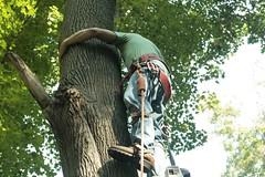 _MG_6340.JPG (zimbablade) Tags: trees sleepyhollow dougmiller videopoem