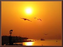 sun&seagull